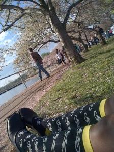 cherry blossom sox